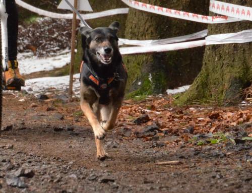 Zughundesport Gruppentrainings im Februar