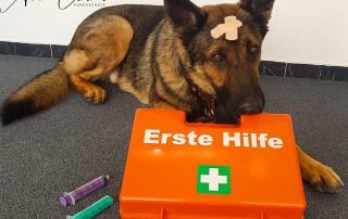 Erste Hilfe Kurs für Hundehalter