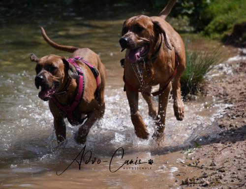 Schwimmen lernt Hund im See- tauchen auch!