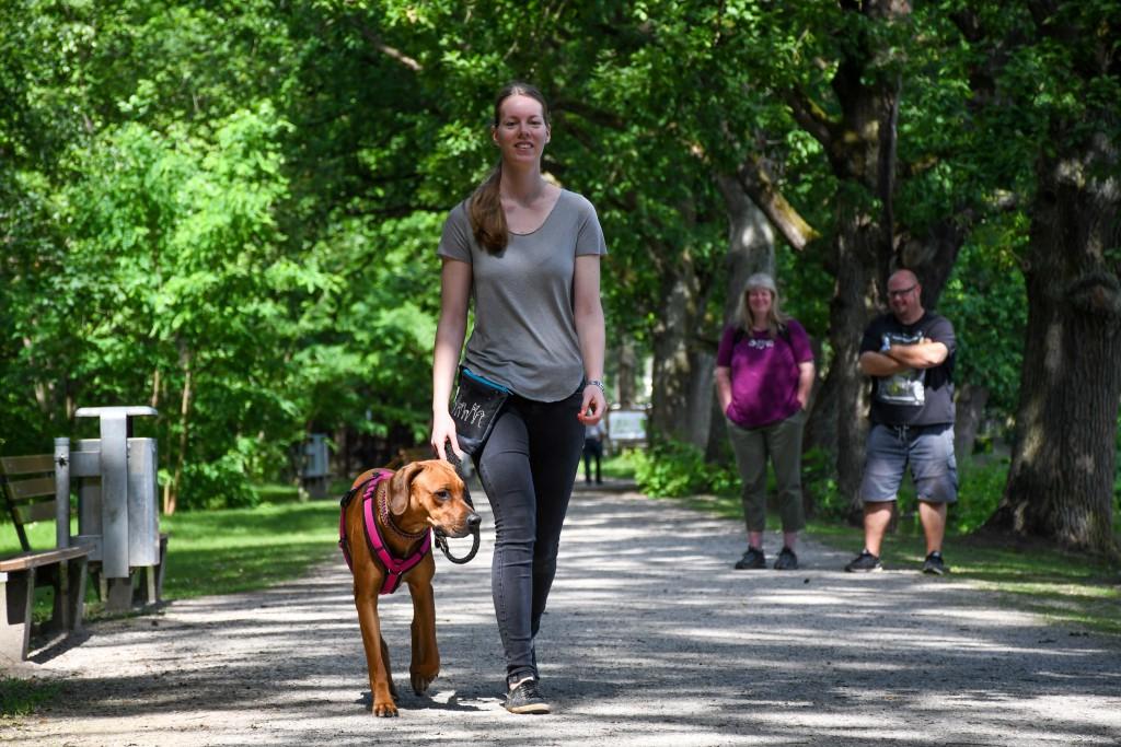 Laufen an lockerer Leine- so entspannt mit 40 kg Hund