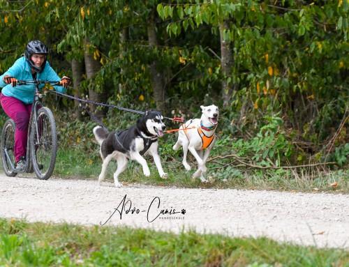 Schnupper-Tagesworkshops Zughundesport