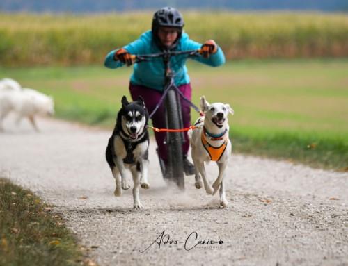 Intensiv-Einzeltraining Zughundesport