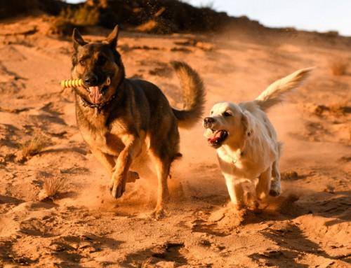 Unsere Welpen und Junghunde starten wieder voll durch